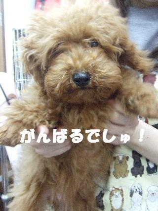 2009_03020014.jpg