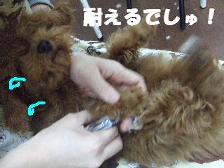 2009_03020018.jpg