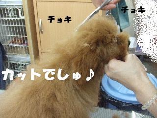 2009_03020040.jpg
