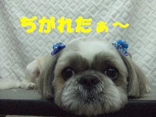2009_03020046.jpg