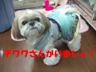 2009_03060019.jpg