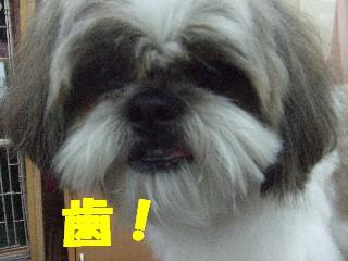 2009_03060034.jpg