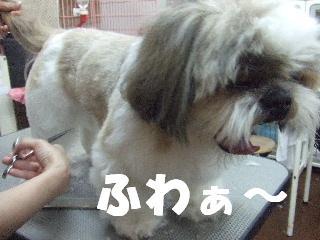 2009_03060038.jpg