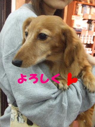 2009_03090006.jpg