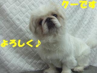 2009_03090017.jpg
