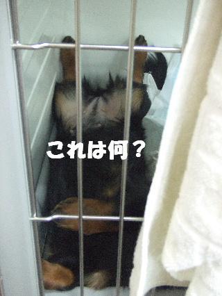 2009_03090021.jpg