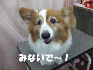 2009_03090030.jpg