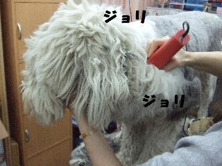2009_03130018.jpg