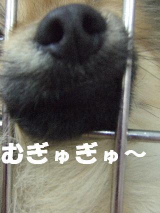 2009_03160032.jpg
