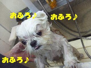 2009_03210037.jpg