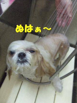 2009_03210040.jpg