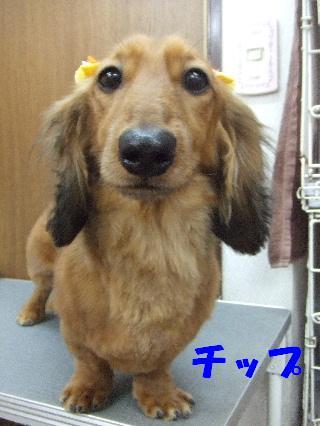 2009_03210057.jpg