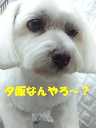 2009_03230061.jpg