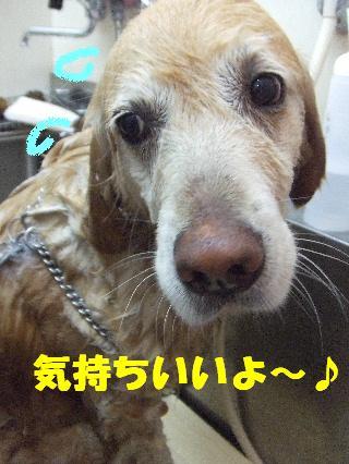 2009_03270013.jpg