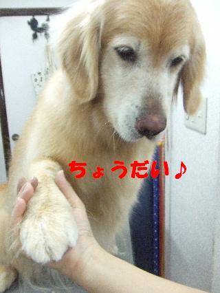 2009_03270035.jpg