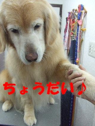 2009_03270036.jpg