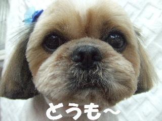 2009_03270045.jpg