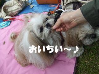 2009_04020026.jpg