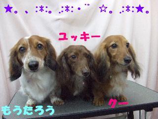 2009_04030067.jpg