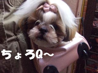 2009_04030094.jpg