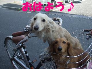 2009_04060007.jpg