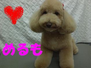 CIMG8838.jpg