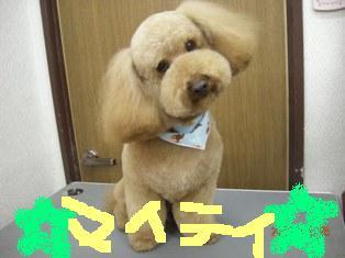 DSCN6165.jpg