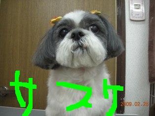 DSCN6209.jpg
