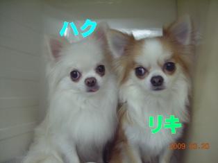 DSCN6646.jpg
