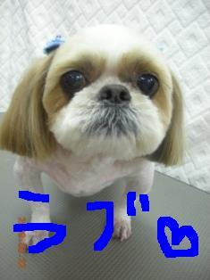 DSCN6709.jpg