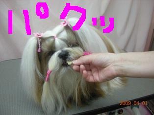 DSCN6908.jpg