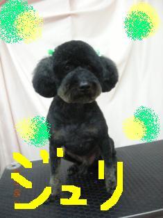 DSCN7904.jpg