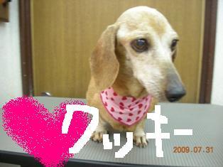 DSCN8767.jpg