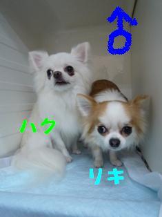 P1040078.jpg