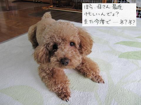 IMG_とし5