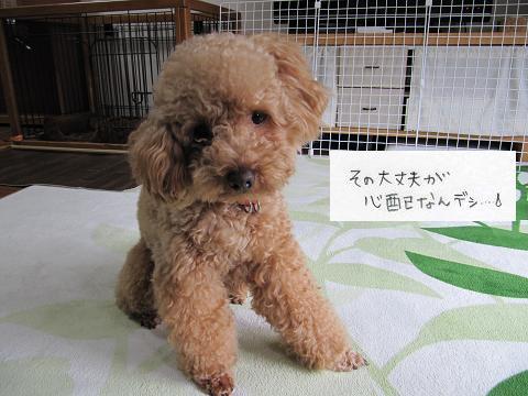 IMG_とし7