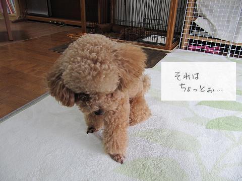 IMG_とし3