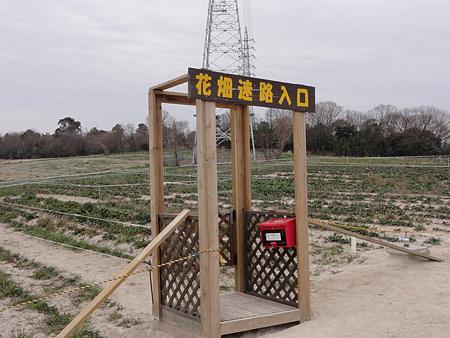 花畑迷路の予定場所・・・本当に咲くの?