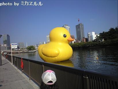 09.9.13アヒルちゃんCA390681