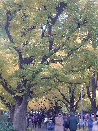 神宮銀杏祭
