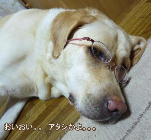 20090725jitaku4.jpg