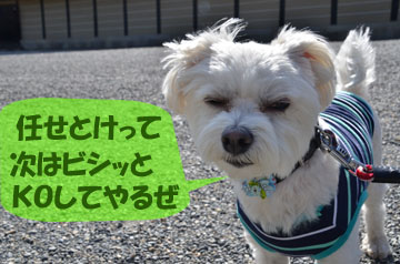 DSC_8071.jpg