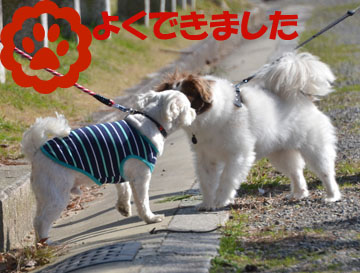 DSC_8091.jpg