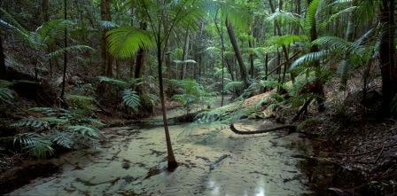 Web river