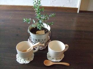teacup スプーンコースター付