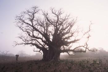 baobabu-1.jpg
