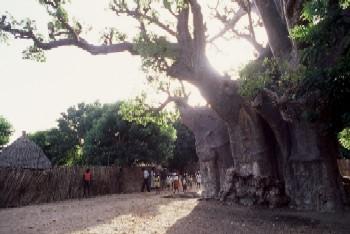 baobabu-2.jpg