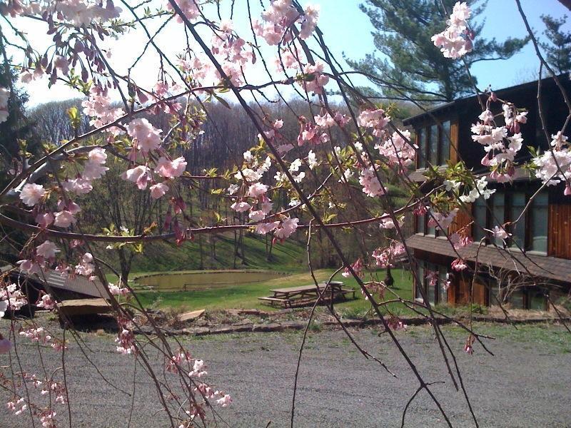 ピッツバーグ桜