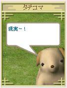 2005y12m10d_203155820.jpg