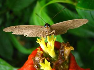 蝶々blog02